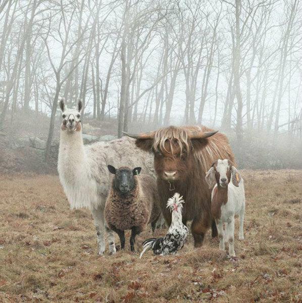 11-Foto-di-animali-in-posa-divertenti-9 - Copia.jpg