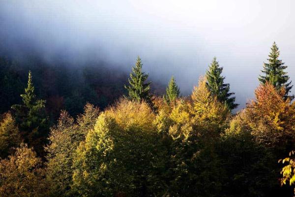 1-foliage-8.jpg