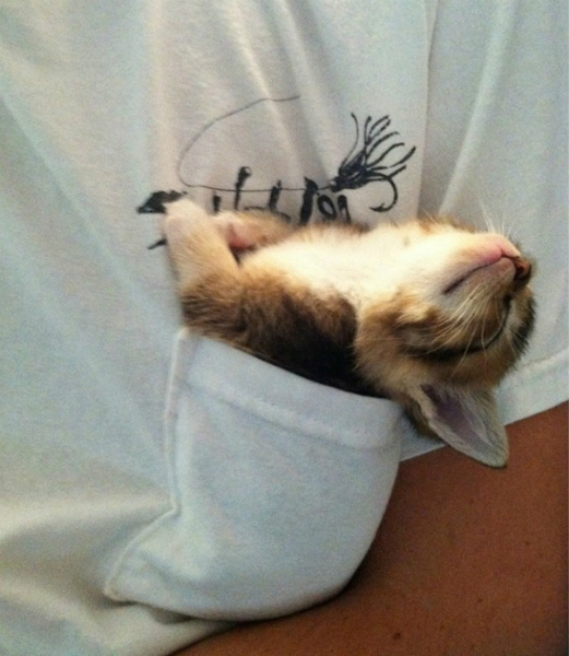 10-gattino-da-taschino.jpg
