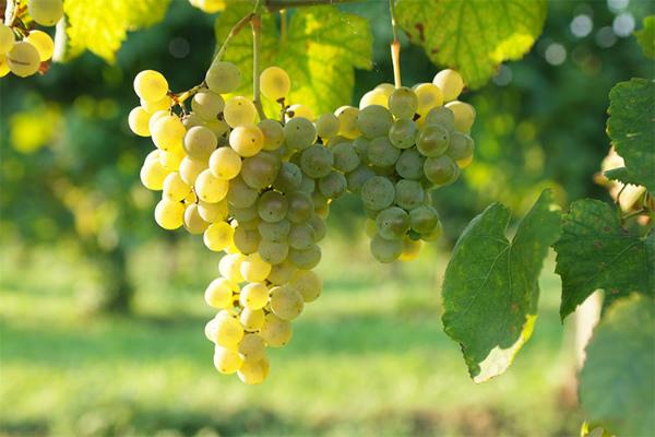 11-vino_prosecco.jpg