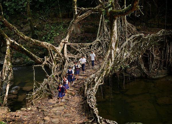 13-scuola-india-foresta.jpg