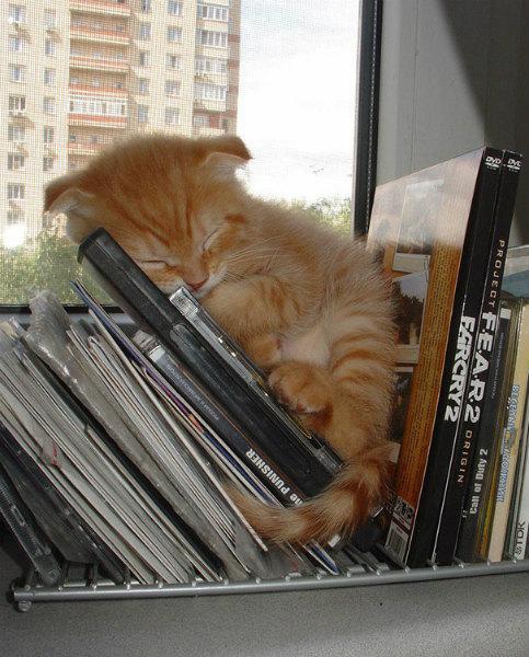15-gattino-dorme-tra-cd.jpg
