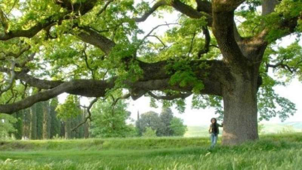 15-quercia-delle-checche-908585.jpg