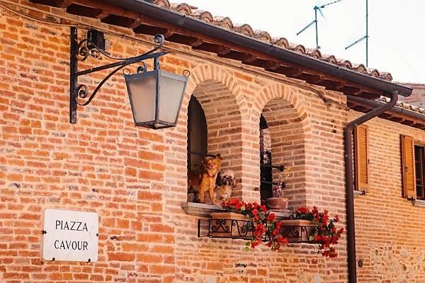 17-cosa-vedere-a-monteleone-d-orvieto-cani.jpg