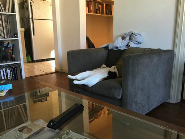 17-gatto-dorme-sul-divano.jpg