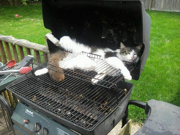 18-gatto-dorme-nel-barbecue.jpg