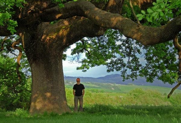 18-quercia-delle-checche-il-lungo-percorso-per-diventare-monumento-verde.jpg