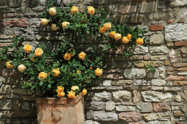 21-1-Assisi 2016 IMG_3082_GF.jpg