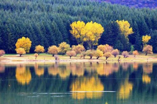 22-Parco Nazionale della Sila.jpg