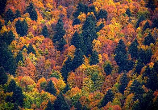 25-Parco Nazionale della Sila2.jpg