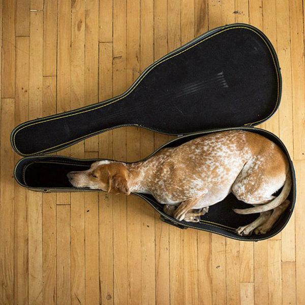 3-cane-dorme-dentrocustodia-chitarra.jpg