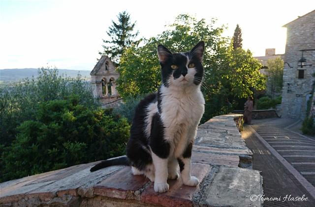 32-Assisi 2017 DSC_0511_GF.jpg