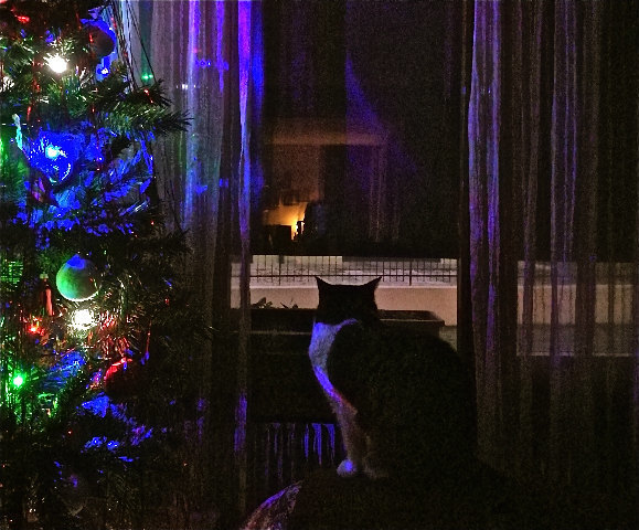 35-spinta attende il Natale.jpg