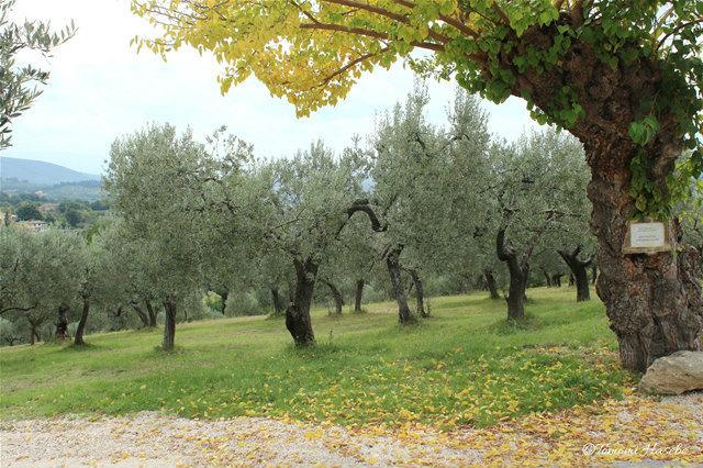 4-Assisi 2014 IMG_0428_GF.jpg
