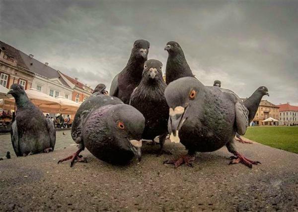 4-Foto-di-animali-in-posa-divertenti-8.jpg