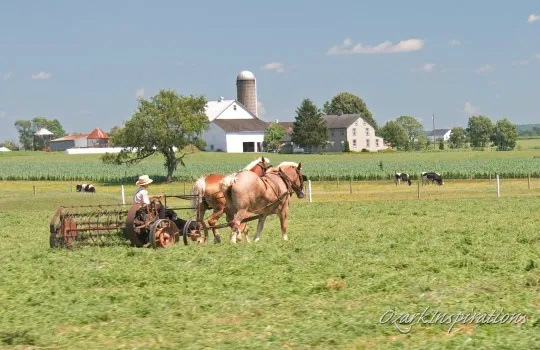4-amish-boy-horse-team-field-lancaster.jpg