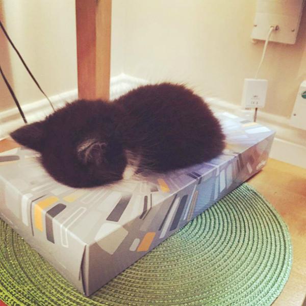 4-gattino-dorme-dentro-portafazzoletti.jpg