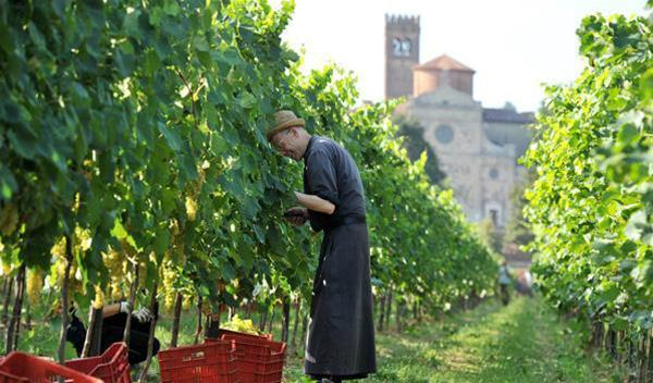 40-nelle-vigne_GF.jpg
