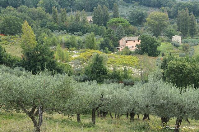 5-1-Assisi 2014 IMG_0351_GF.jpg