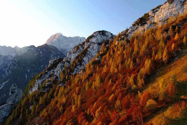 5-foliage-1.jpg