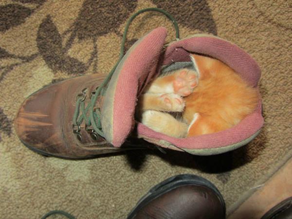 5-gattino-dorme-dentro-scarpone.jpg