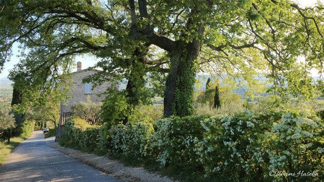 6-Assisi 2017 IMG_7789_GF.jpg