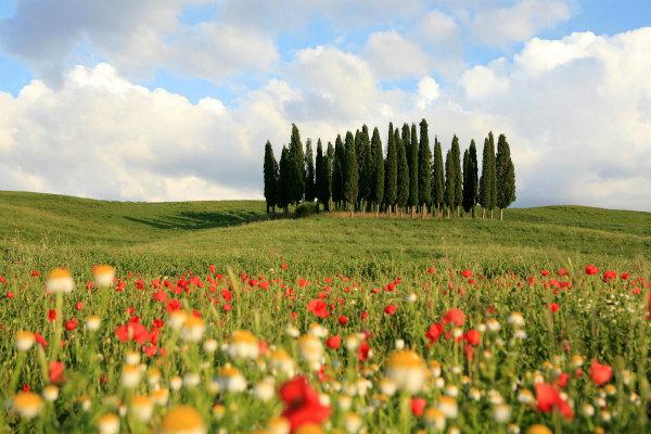 6-valdorcia-cypresses-flowers.jpg