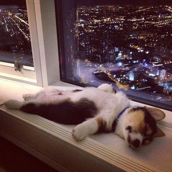 8-cane-dorme-sul-davanzale.jpg