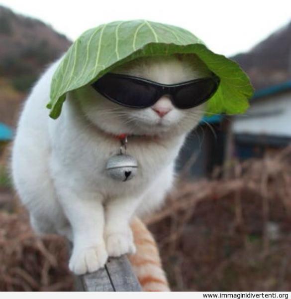 sun-gatto-con-un-cappello-di-lattuga.jpg
